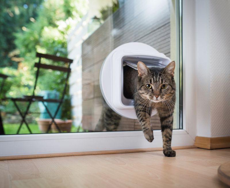 Πορτάκια κατοικιδίων για γατες